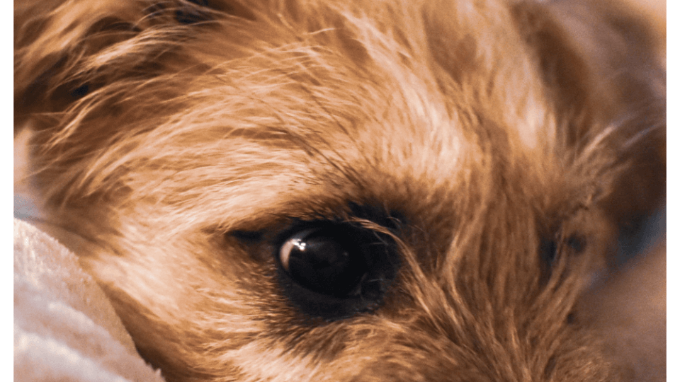 What are the signs and symptoms of heartworms in dogs?
