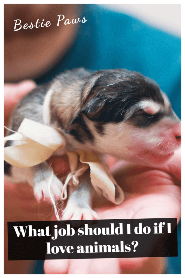 What job should I do if I love animals?