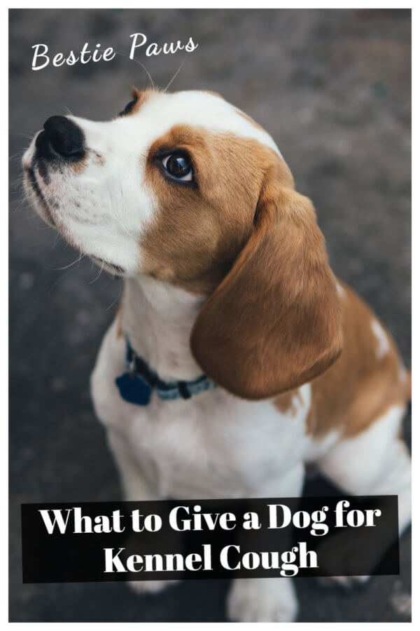 How do you know if your dog has kennel cough?
