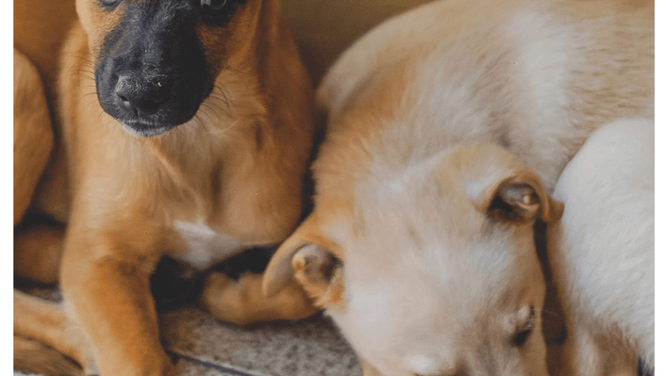 How can I treat a sick dog at home?