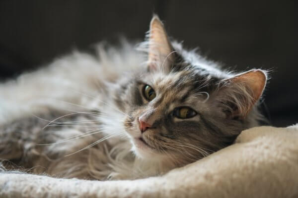 Recognizing the Signs of Illness in Cats