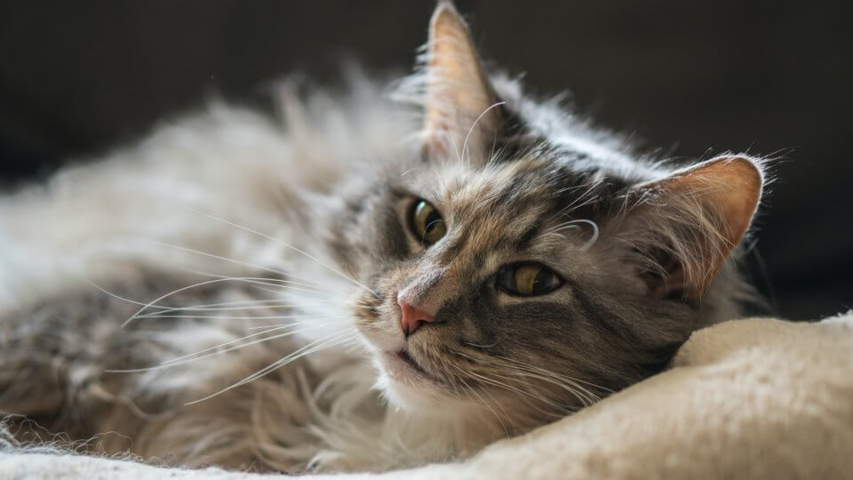 What are the signs of a sick cat?