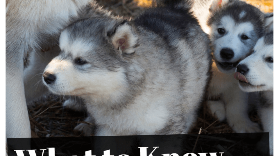 Labor and Delivery in Dogs