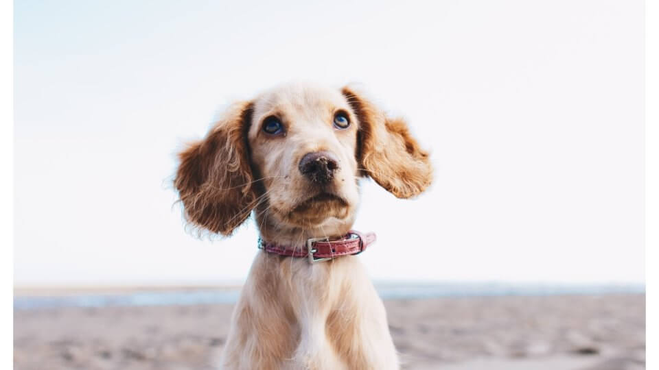 How Do Dogs Get Roundworms?