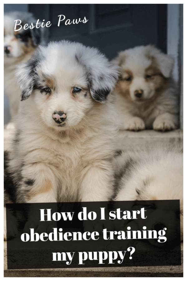 How do I start obedience training my puppy?
