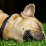 How do you know if your dog has an ear infection or ear mites?