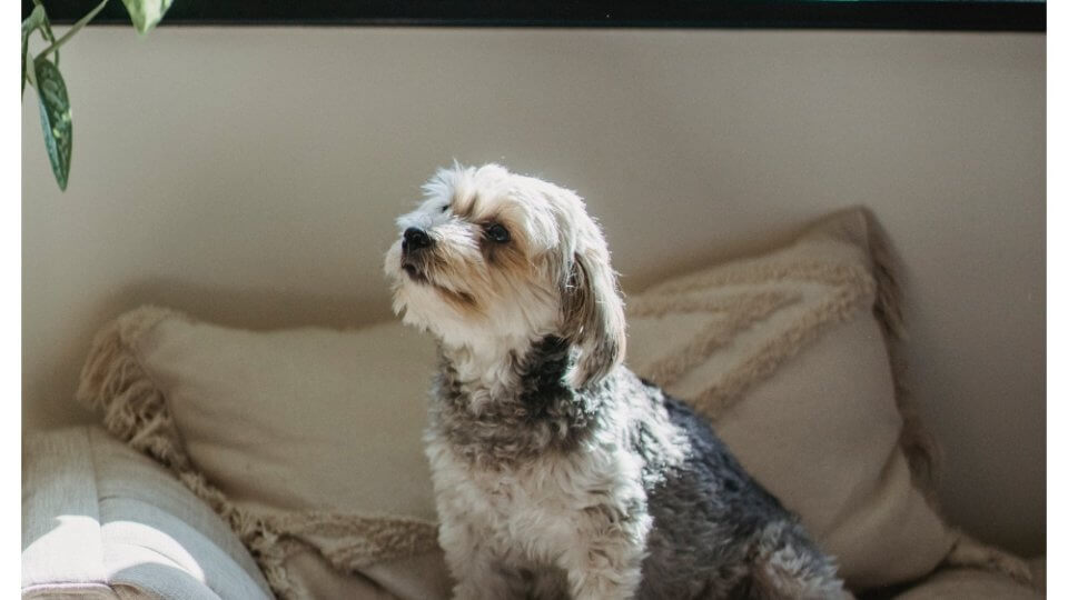 What are the symptoms of pyometra in dogs?