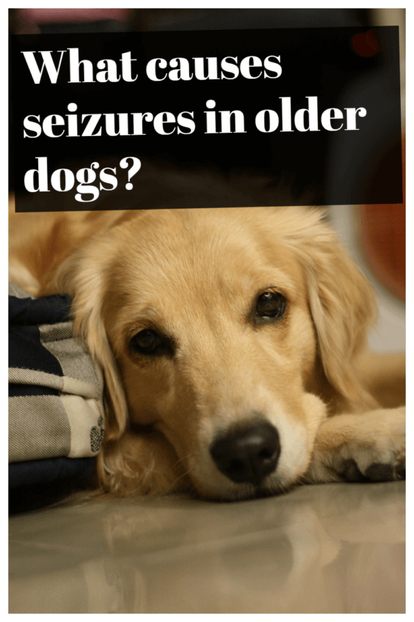 What causes seizures in older dogs?