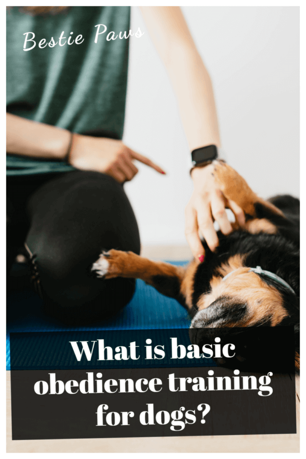 How do I teach my dog basic obedience?