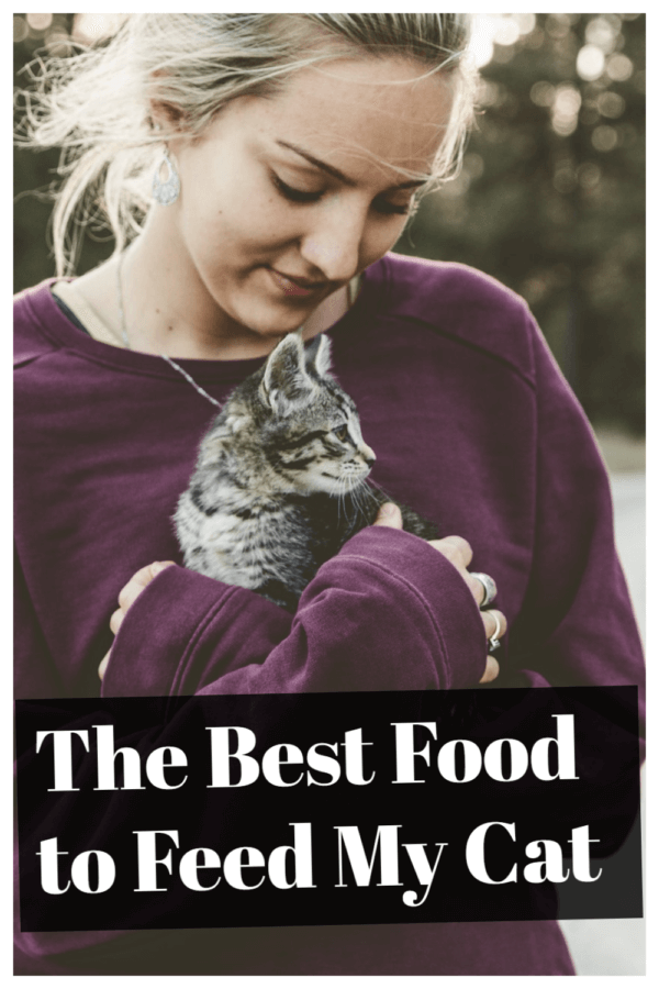 Best food for cats