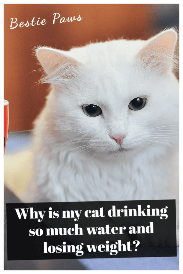 Why is my cat drinking so much water and losing weight?