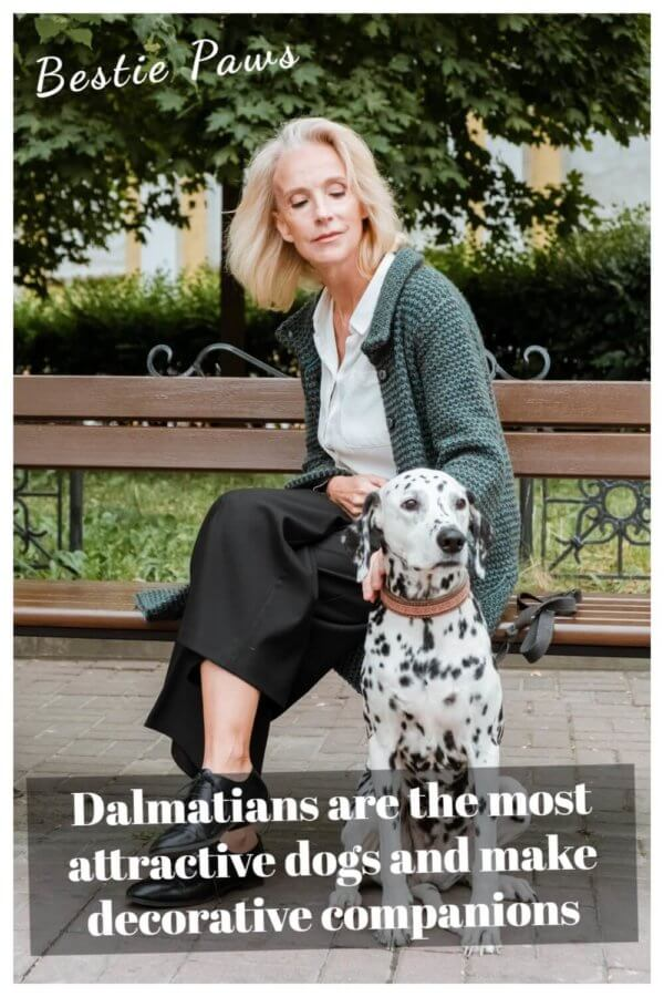 Is a Dalmatian a good family dog?