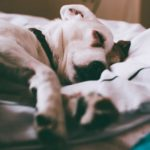 How to euthanize a dog at home with benadryl