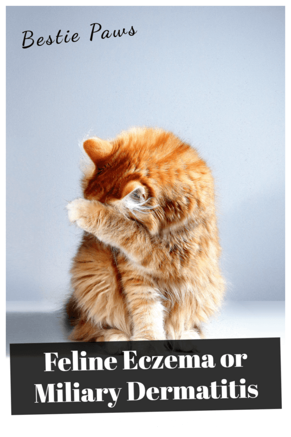 How do you get rid of miliary dermatitis in cats?