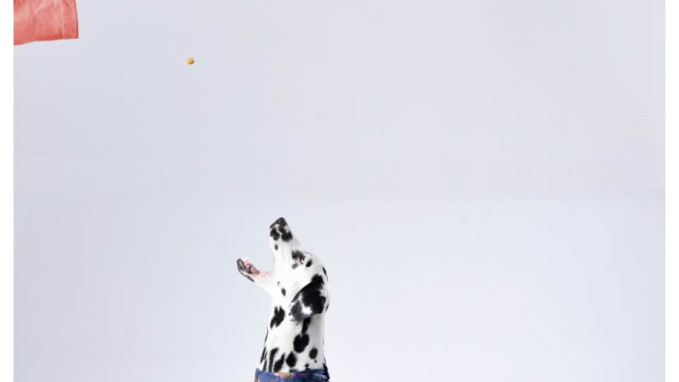 Are Great Danes smart and easy to train?