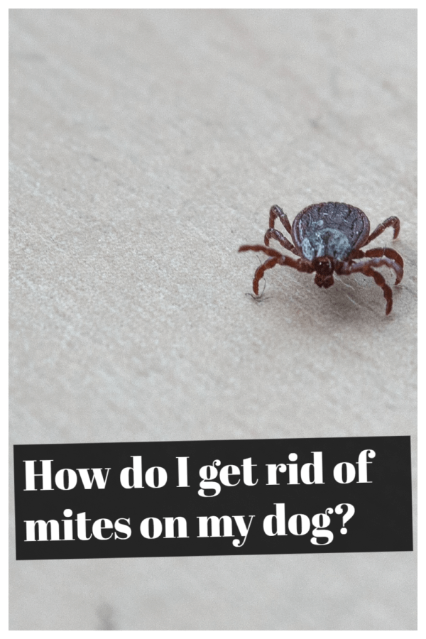 How do I get rid of mites on my dog naturally?