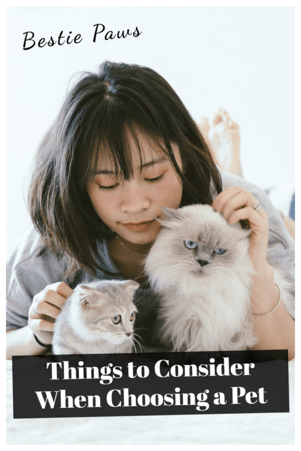 Things I wish I knew before getting a pet