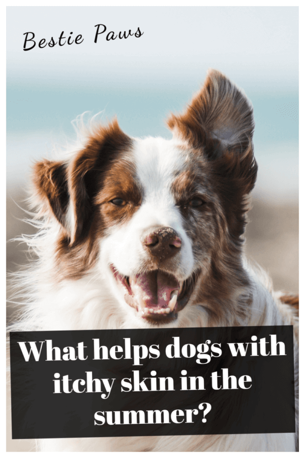How to Treat Itchy Skin in Dogs Naturally