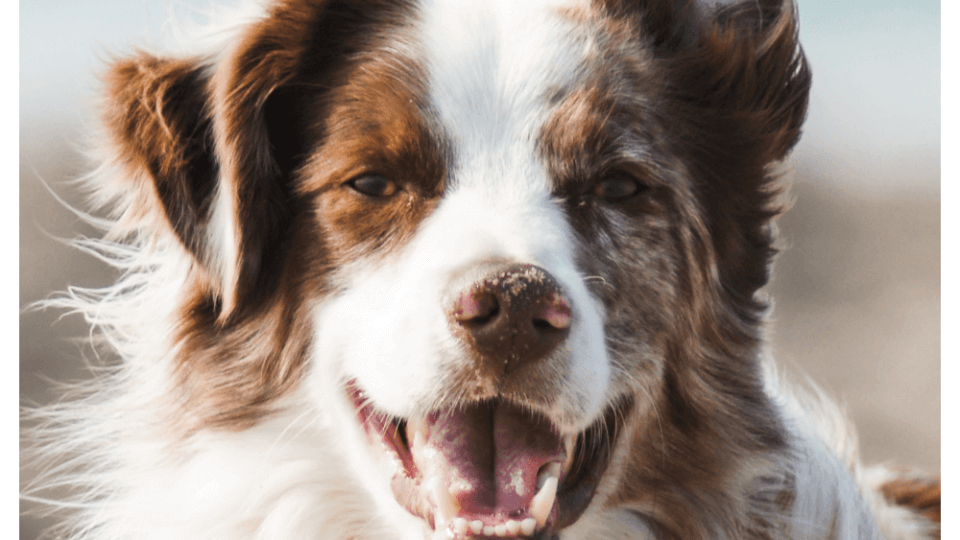 Home Remedy for Itchy Skin in Dogs