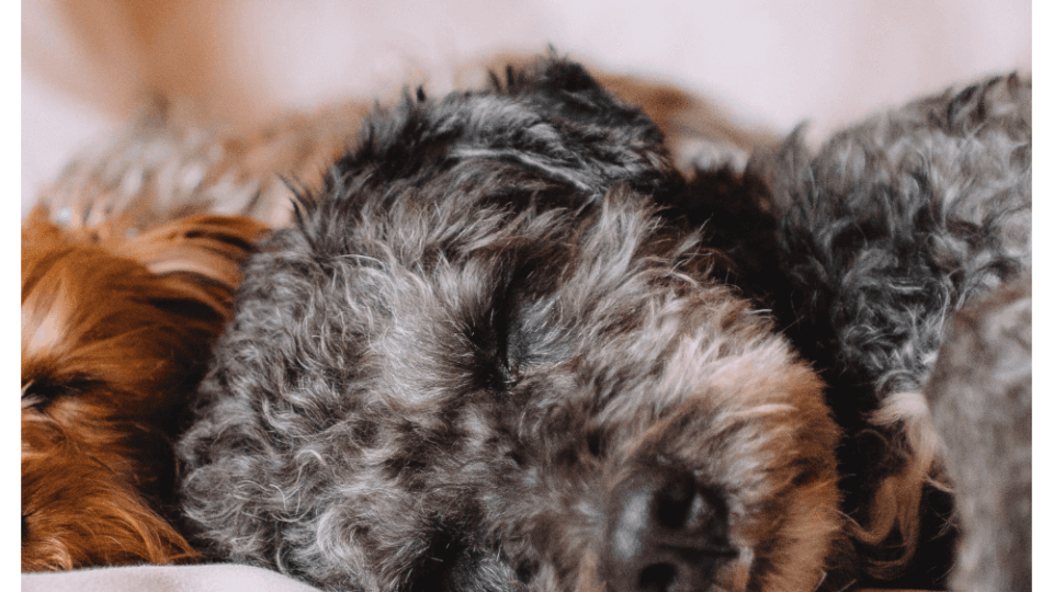 What can I give my dog with an upset stomach?