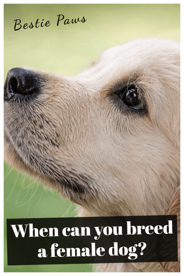 When can you breed a female dog?
