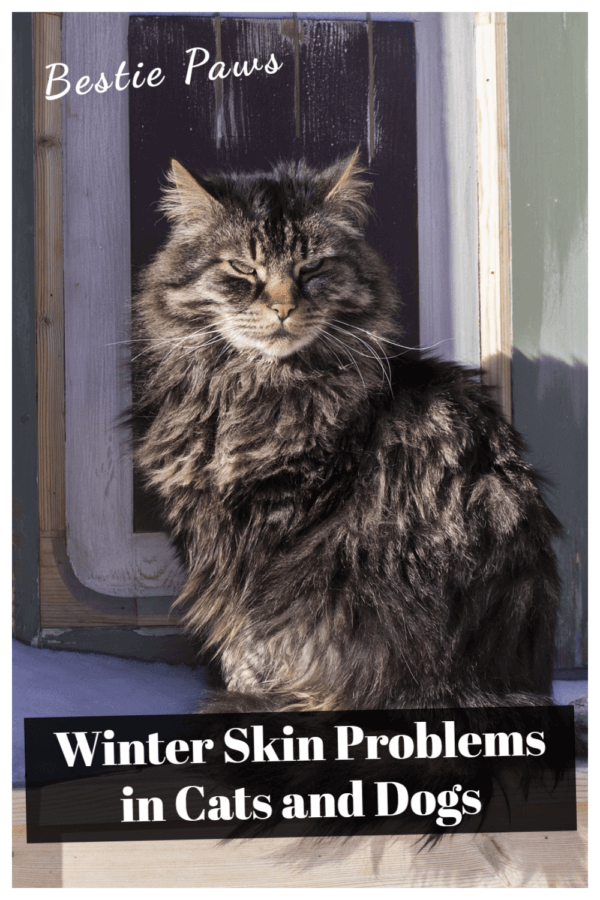 Winter Skin Problems in Cats and Dogs