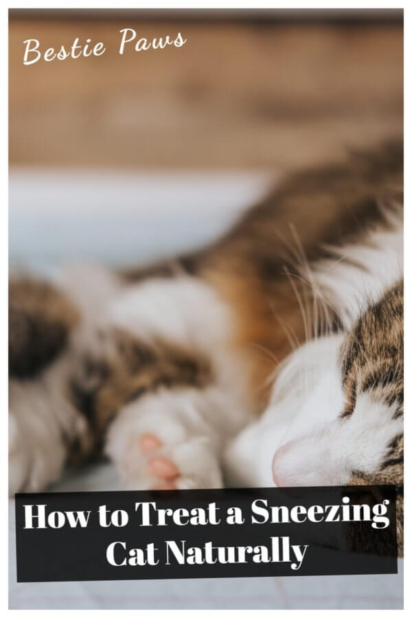 Why is my cat sneezing a lot?