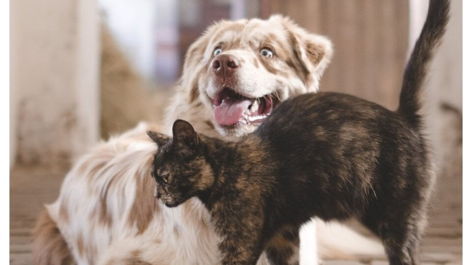 When to put down or euthanize a pet with renal failure