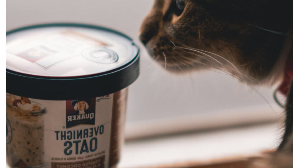 What can cats eat besides cat food?
