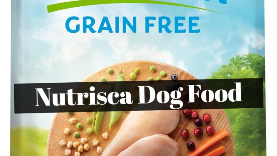 Where to Buy Nutrisca Dog Food