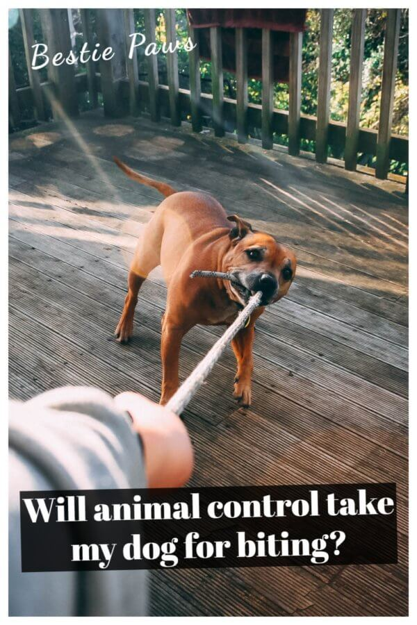 Will animal control take my dog for biting